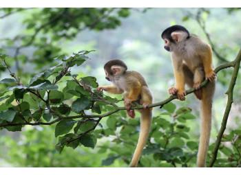El Día del Mono